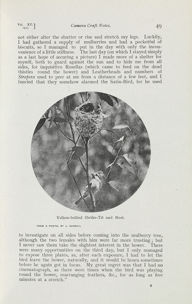 Fig. 2: J.S.P. Ramsay, Yellow-Bellied Shrike-Tit and Nest, The Emu, 15:1, July 1915, 49.